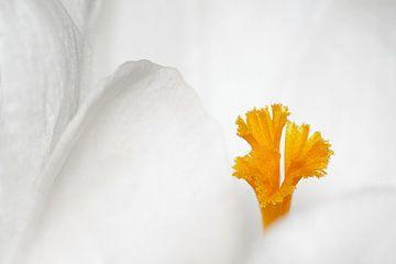 Eenvoud in wit von Marlies Prieckaerts