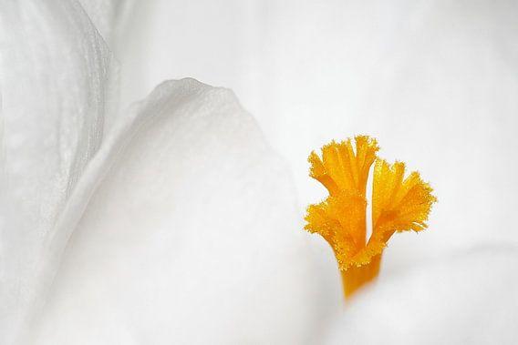 Eenvoud in wit