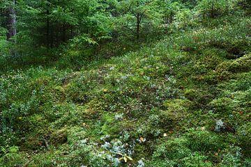Sommerwald von Heike Hultsch