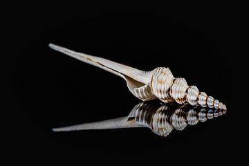 Shell von Paquita Six