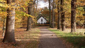 Chalet romantique dans la forêt d'automne sur Robin Jongerden
