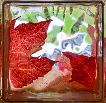 Gouden herfstbladeren door glas baksteen venster van Sasha Samardzija