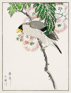 Japanischer Maskenapfelfink und Seidenbaum Illustration von Numata Kashu von Studio POPPY