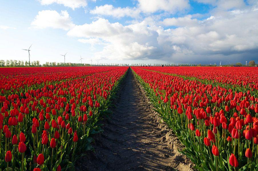 Tulpen symmetrie van Joris Pannemans - Loris Photography