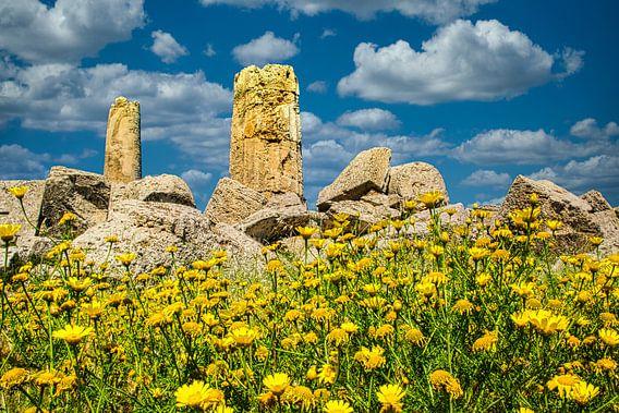 Gele voorjaarsbloemen voor een ruïne van een Griekse tempel