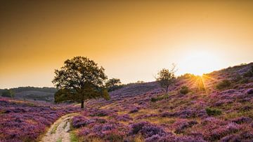 Sonnenaufgang auf der Posbank von Rob Sprenger