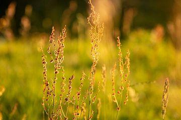 Wildblumen von Rianne Fotografeert