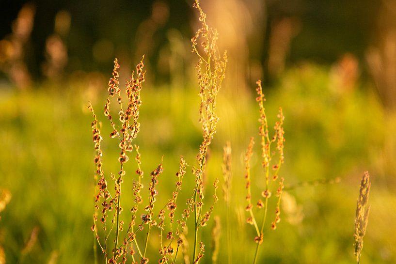 Wildflowers van Rianne Fotografeert