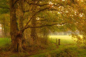 Oude houtwal op landgoed Baasdam van Ron Poot