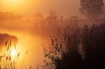 Reflexion Sonnenaufgang in nebligen Polder von Coen Weesjes