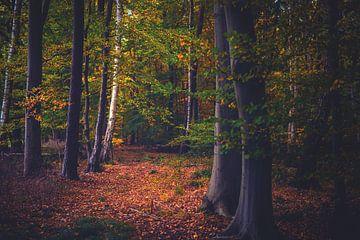 Herfst in het bos van Florian Kunde
