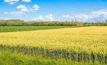 Kleurrijk zomerlandschap in Noord-Brabant van Ruud Morijn