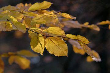 Herbstliche Farbe von Marcel Pietersen