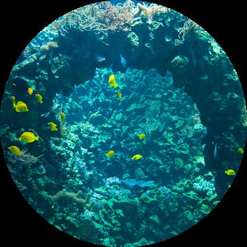 Zoo Antwerpen 10 van Cynthia Jansen