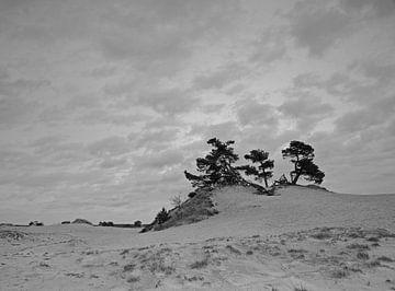 Bomenpartij op Kootwijkerzand van Incanto Images