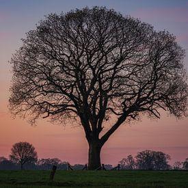 Baum des Lebens von Reinier Snijders