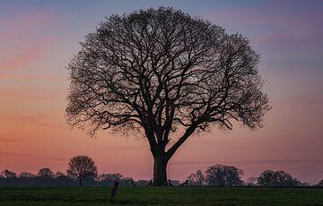 Tree of life van Reinier Snijders