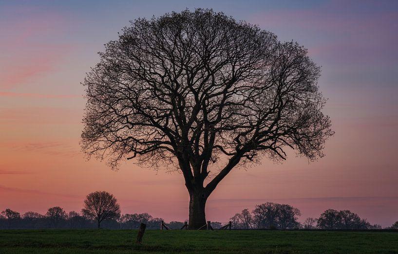 L'arbre de vie sur Reinier Snijders