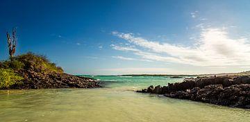 Zeezicht van de Galapagos van René Holtslag