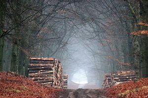 Een eenzaam stil bos van Herman van Alfen