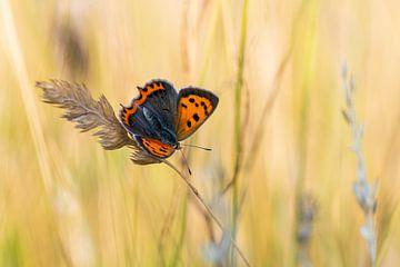 Kleiner Schmetterling von Mark Dankers