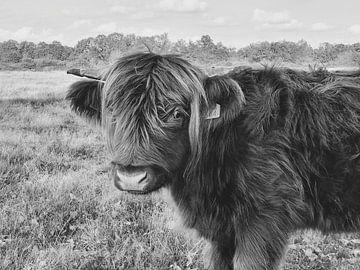 Highlander cow - black&white van Esther Venema
