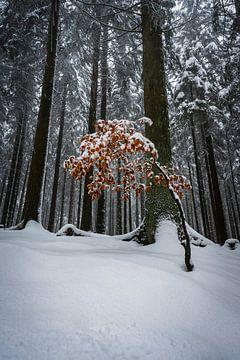 Sei anders  - Winterszene von Jens Sessler