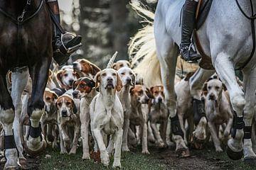 Foxhounds und Pferde von Wybrich Warns