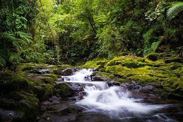Strom im Dschungel von Panama