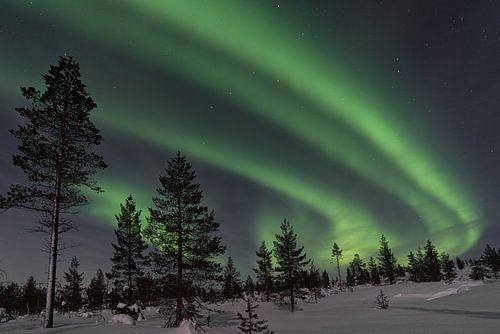 het noorderlicht met bomen op de voorgrond