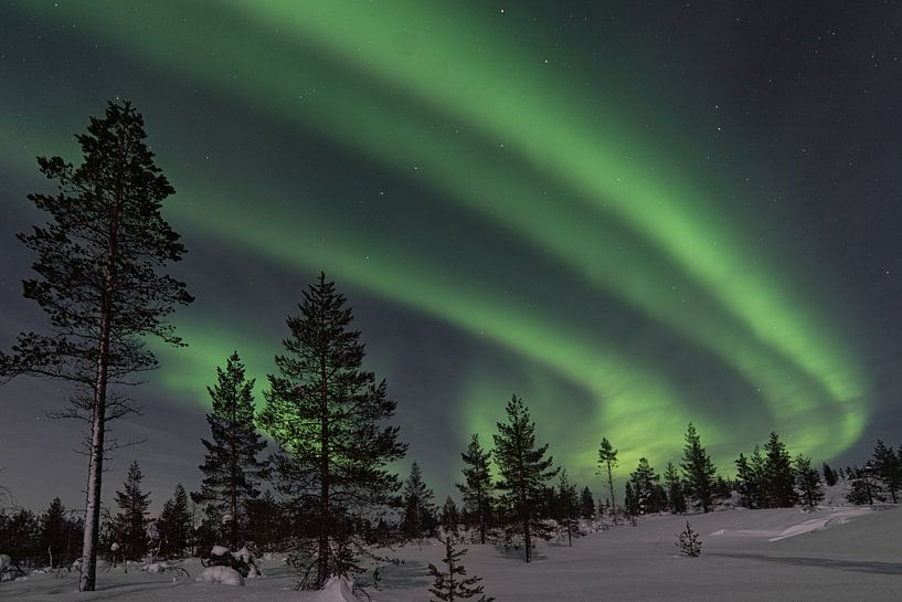 das Nordlicht mit Bäumen im Vordergrund von Robin van Maanen