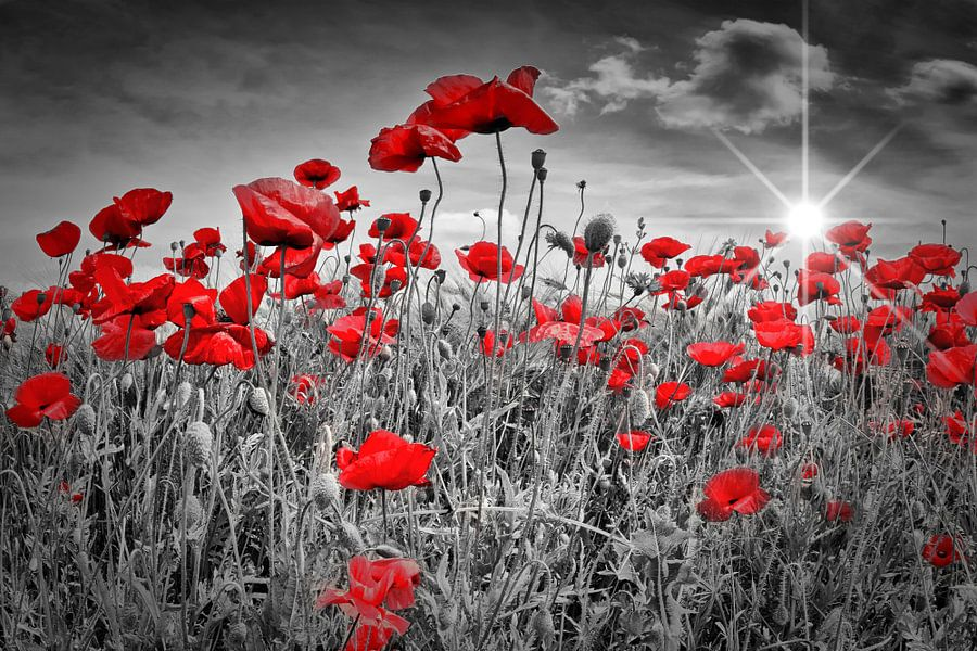 Idyllic Field of Poppies with Sun