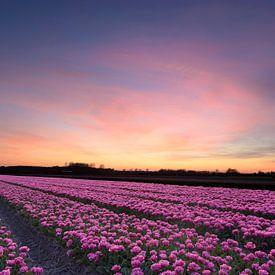 Zwiebelfeld bei Sonnenuntergang von Barbara Brolsma