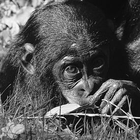 Baby chimpansee in zwart wit  von Sandra de Moree