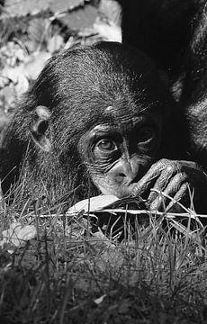 Baby chimpansee in zwart wit  van Sandra de Moree