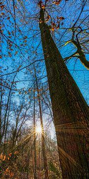 Coucher de soleil entre les arbres sur Martin Haunhorst