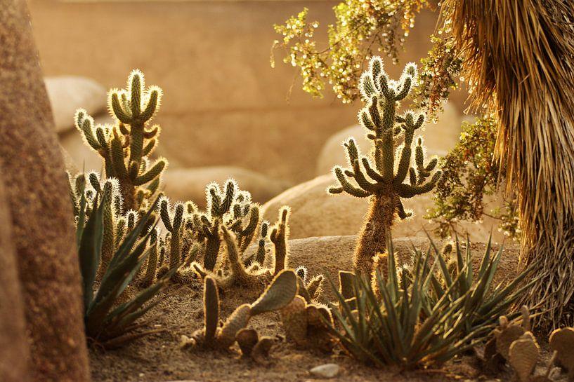 Woestijn van Nikki de Kerf