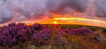 Bloeiende Heide 9 van Peter Heins