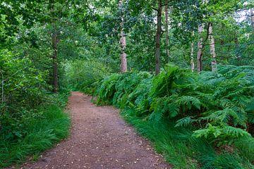 Groene oasis van Lili's Photography
