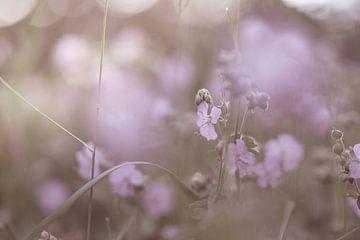 Blumen Teil 143 von Tania Perneel