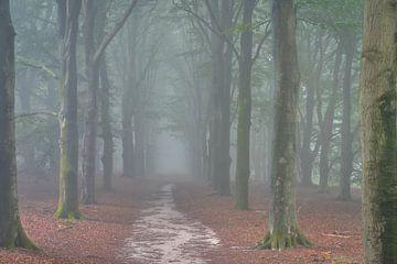 Het kaapse bos in de mist van zeilstrafotografie.nl