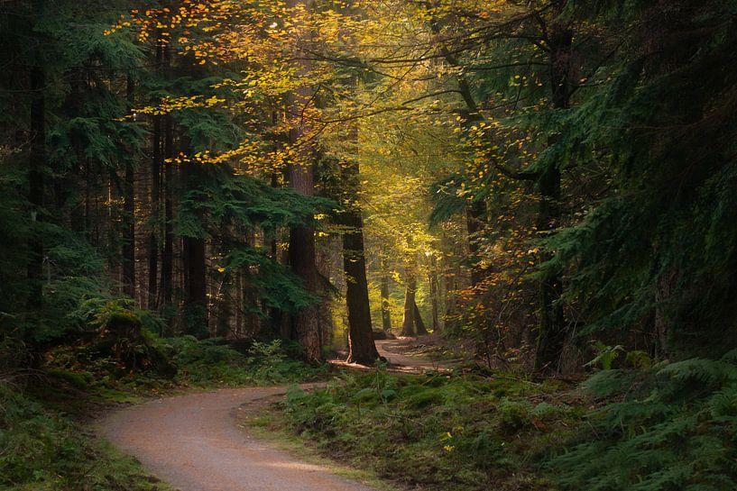 Autumn colors van Roelie Steinmann