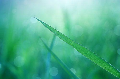 Magical green...