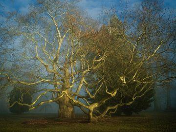 Oktopuss-Baum im Nebel von Lars van de Goor
