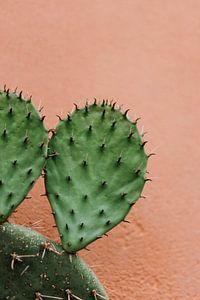 Cactus tegen een roze muur van Wianda Bongen
