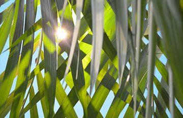 Zon door palmbladeren