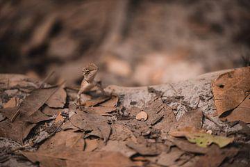 Thai Eidechse von