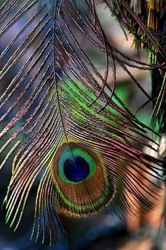 Feather van esther snoeck