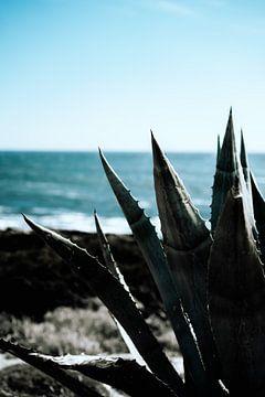 Aloe Vera-Pflanze am Meer von AIM52 Shop