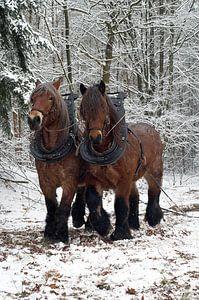 Werkpaarden in de sneeuw 5912003061 fotograaf Fred Roest van Fred Roest